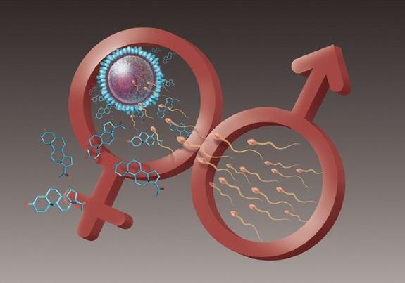 skolko-zhivut-spermatozoidi-s-h-hromosomami